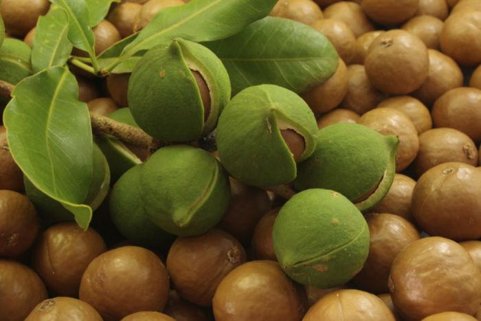 Чем полезен орех макадамия
