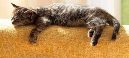 Как убрать шерсть с дивана
