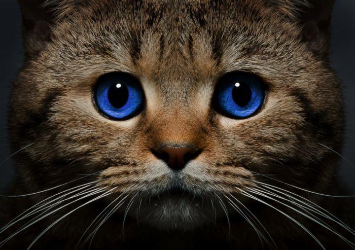 Нужно ли вакцинировать кошку, которая не гуляет на улице?