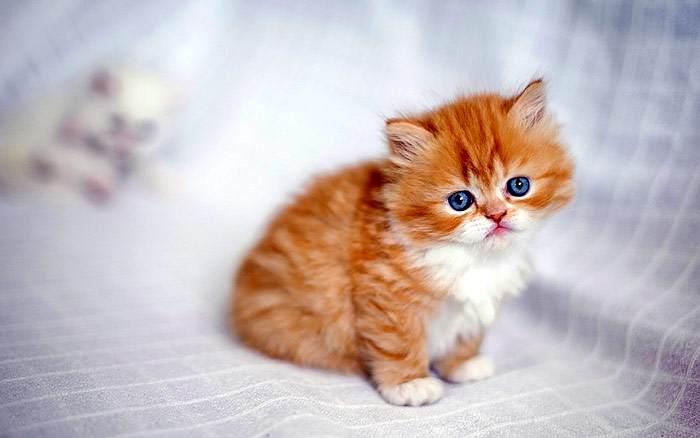 Как можно назвать котёнка-мальчика