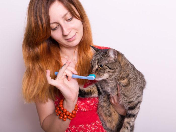 Как ухаживать за кошкой или котом