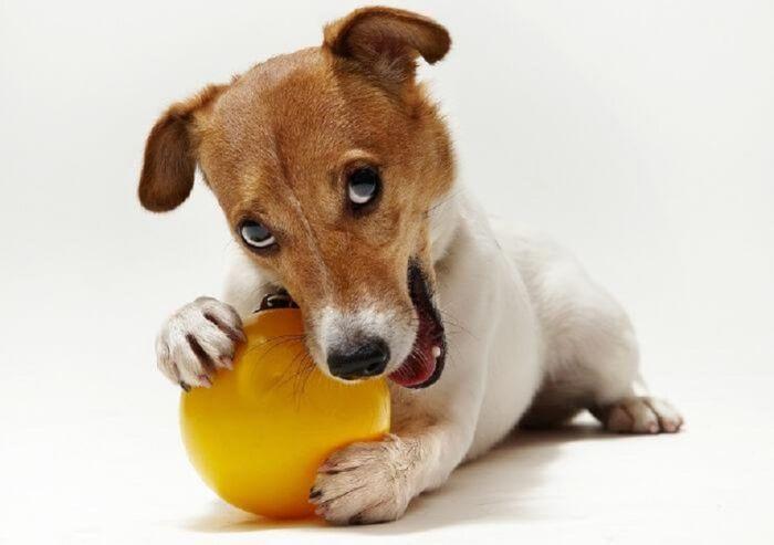 Собаку купить на авито