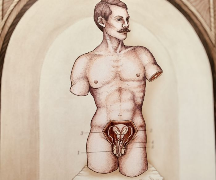 Мужская половая система