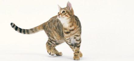 Как устроена кошка?