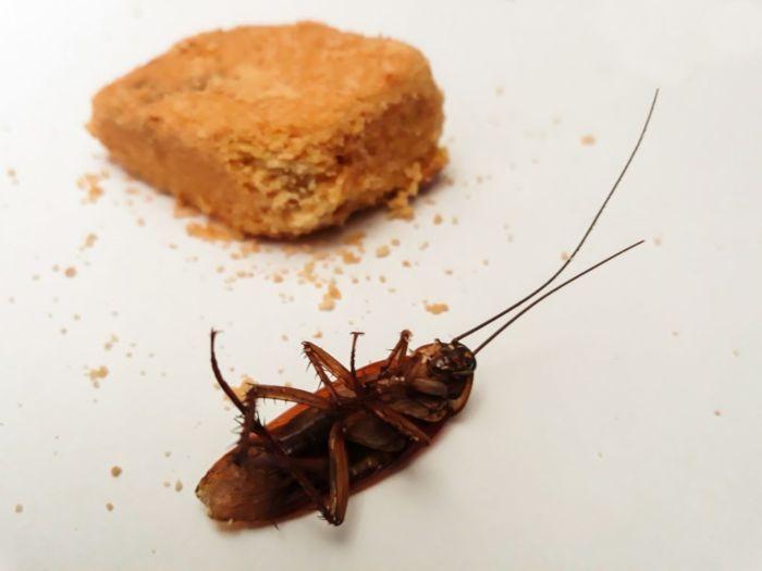 Чем вывести тараканов