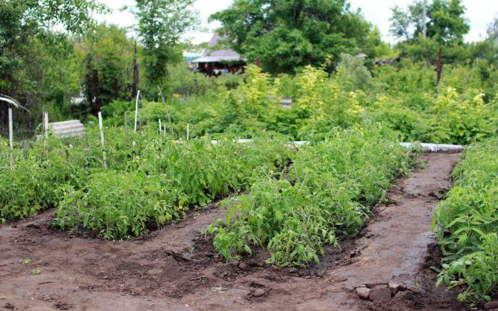 Земли сельскохозяйственного назначения. Можно ли строить дачи