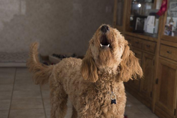 Что делать, если у соседей лает собака.