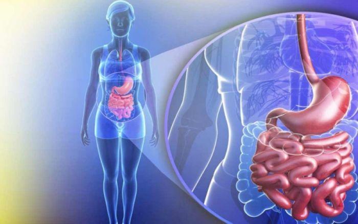 Лимфома: все, что нужно знать о заболевании