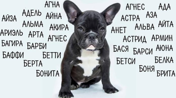 Как назвать собаку-девочку