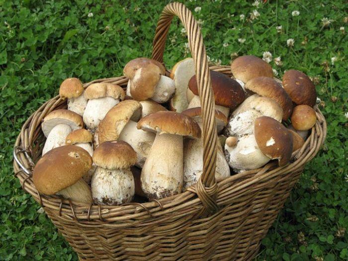сколько солить грибы при варке