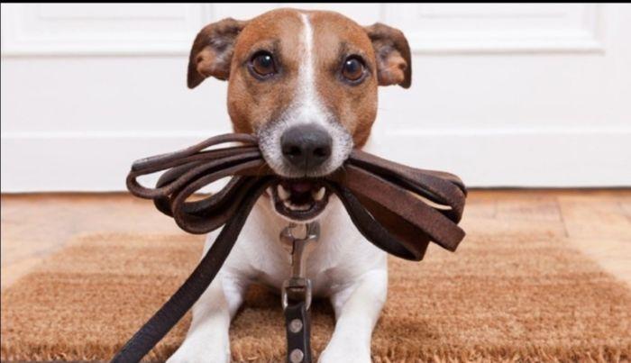 Как быстро приучить щенка к выгулу на улице