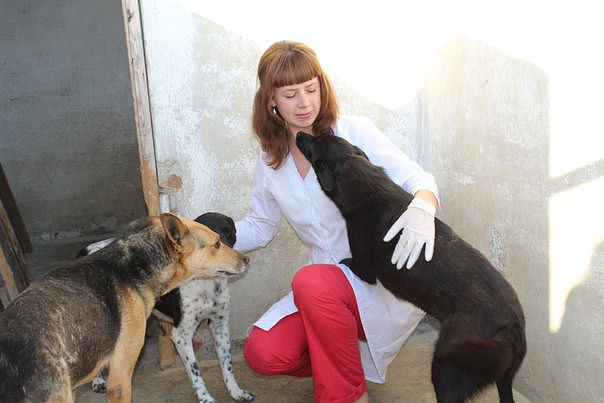 Ветеринар - вся правда о профессии