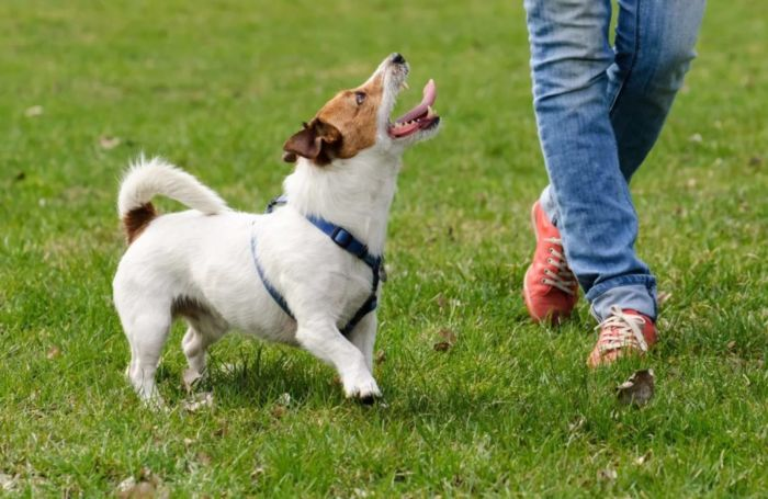 Как научить собаку команде «голос»