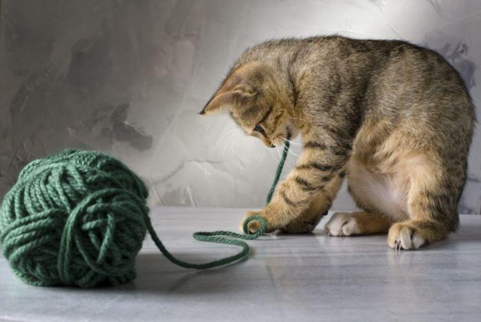 Нужны ли дома кошки?
