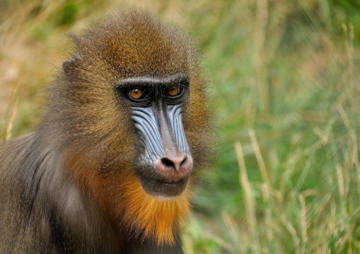 Кто такие приматы