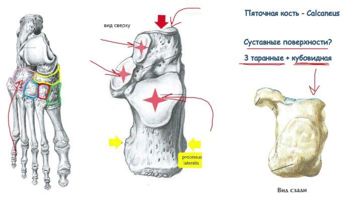 Что такое суставы
