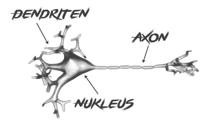 Что такое аксон