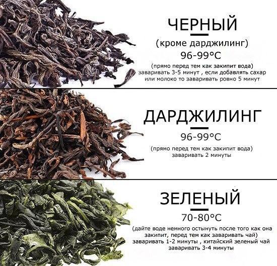 Как правильно заваривать зеленый чай листовой