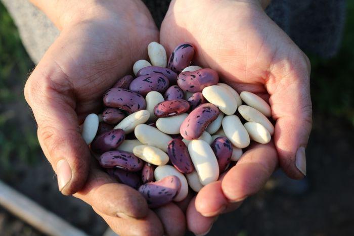 Как варить фасоль красную с замачиванием