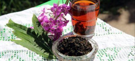 Иван-чай — полезные свойства