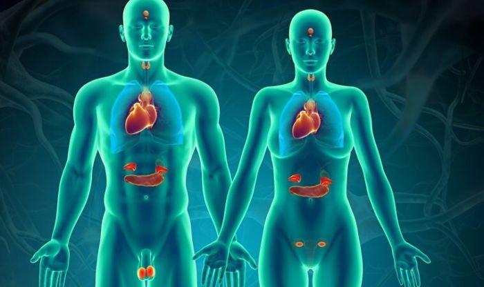 Что такое эндокринная система