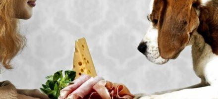 Правильное питание для вашей собаки