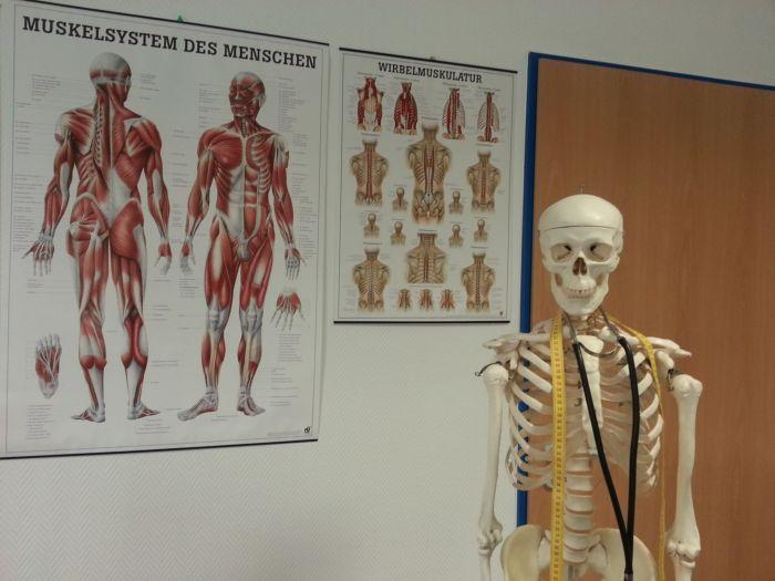 Что такое анатомия