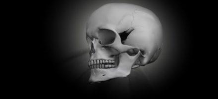 Что такое череп