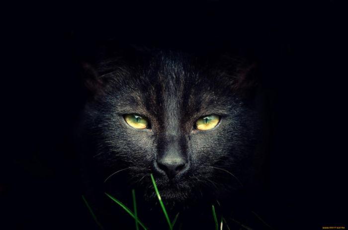 Как назвать чёрного кота